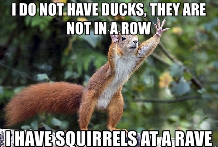 I do not have ducks, they are not in a row, I have squirrels at a rave